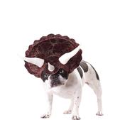 Déguisement tricératops pour chien